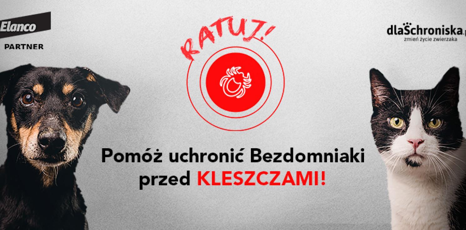 Inowrocław - Trwa akcja Ratuj! Pomóż bezdomnym zwierzętom
