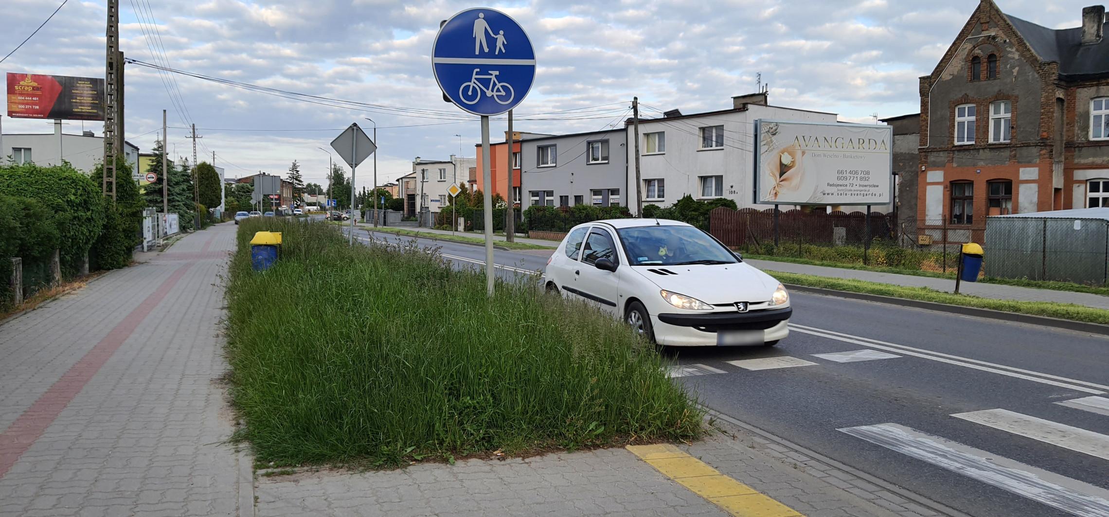 Inowrocław - Metrowe zarośla przy ulicach i chodnikach