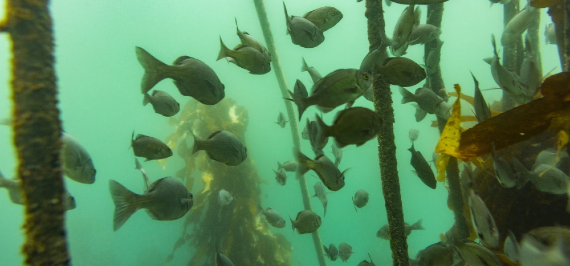 Badanie: w śródlądowych wodach zaczyna brakować tlenu