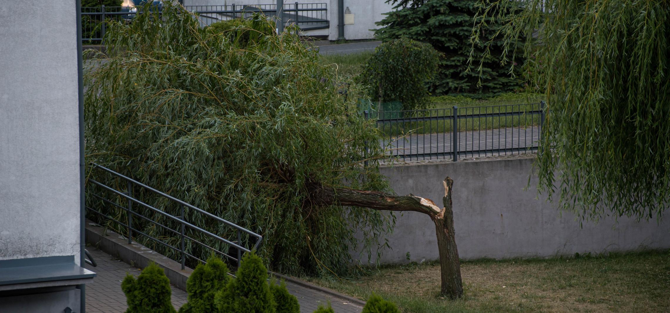 Inowrocław - Wiatr złamał drzewo na Solnie. Jest nagranie