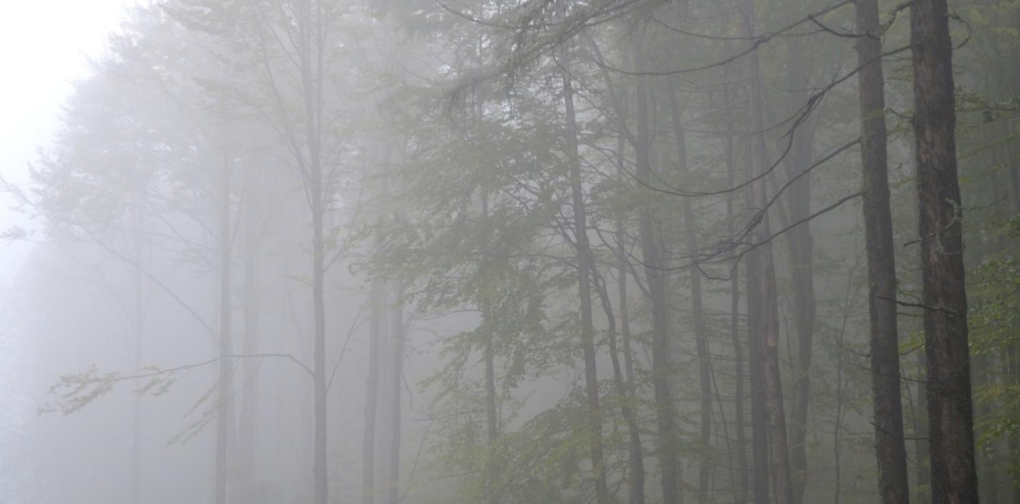 Kraj - IMGW: w niedzielę deszcz niemal w całej Polsce