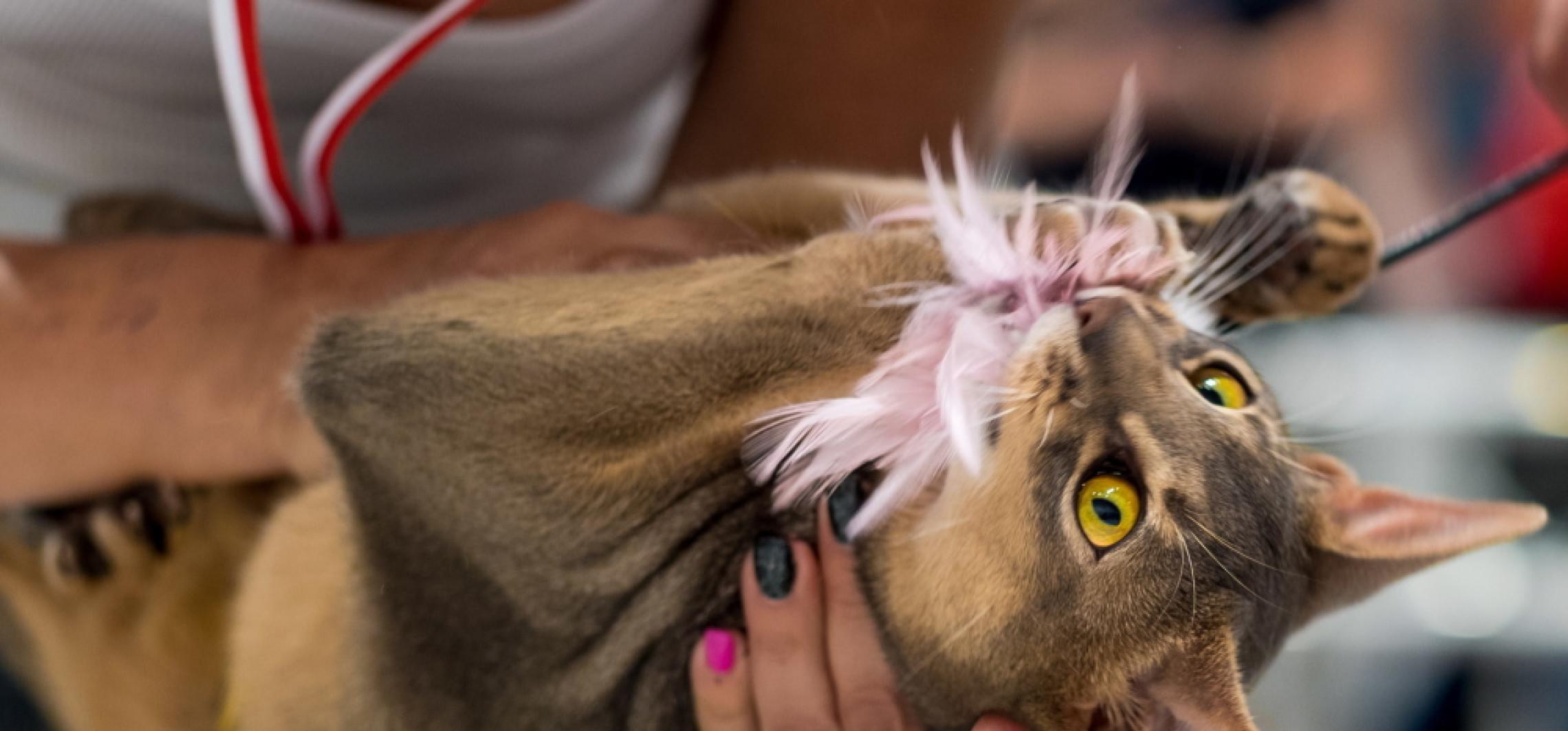 Osobowość kota jest związana z rasą