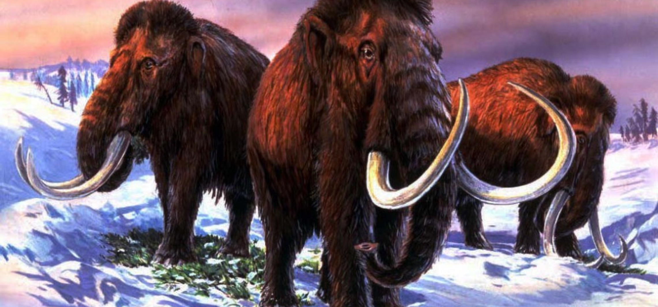 """""""Guardian"""": naukowcy chcą odtworzyć mamuty, pierwsze mamuciątko może urodzić się za sześć lat"""
