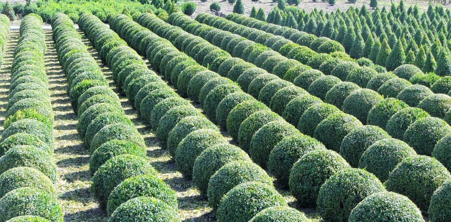 Mogilno - Okradli szkółkę krzewów. Wpadli w zasadzkę