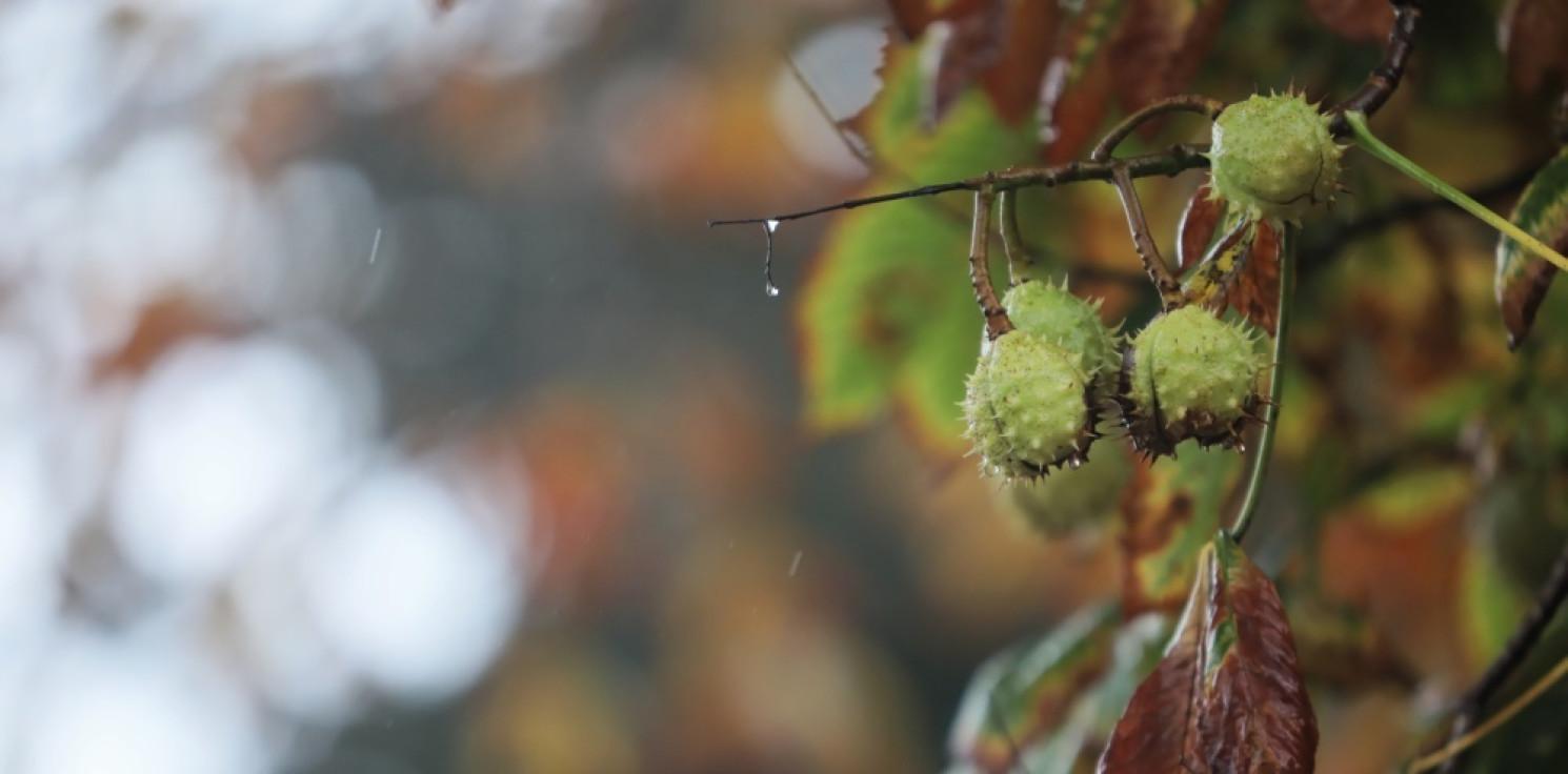 Kraj - IMGW: w czwartek chłodno, na zachodzie deszczowo