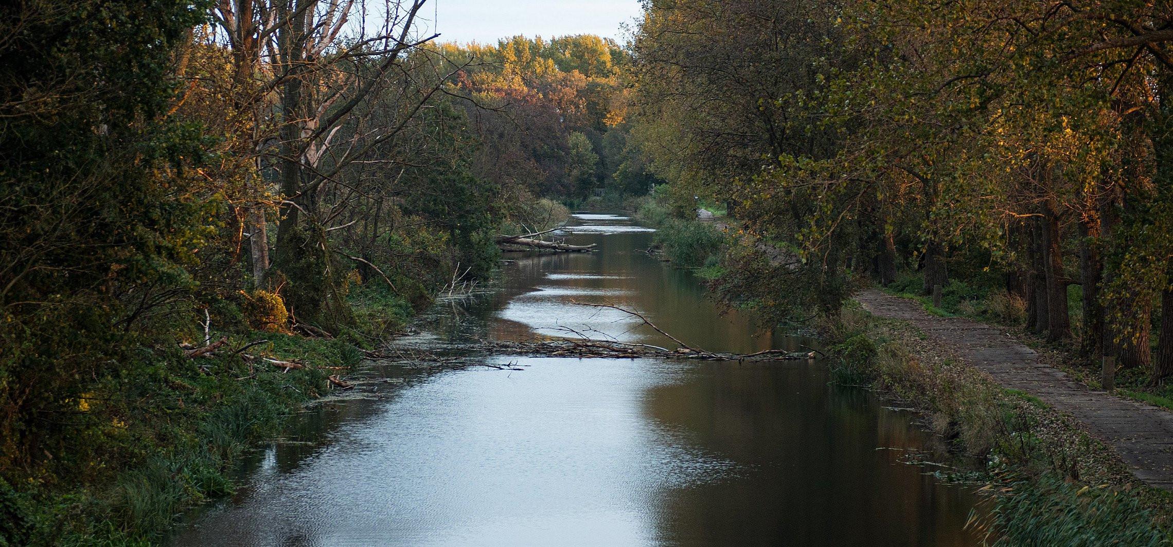 Powalone drzewa w rzece Noteć