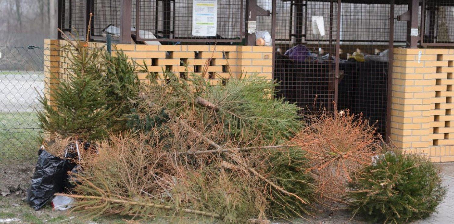 Rozmaitości - Lasy Państwowe: choinka po świętach nie musi trafić do śmietnika